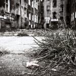Szczecin :: Obrońców Stalingradu ::16