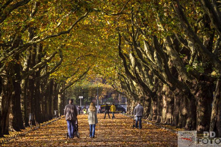 Szczecin, zdjęcia, fotografie, zdjęcia szczecina, jesień w Szczecinie, jesienny Szczecin, deszcz, drzewa, kolorowy Szczecin, fotogaleria, zdjęcia, galeria zdjęć, jesień, w Szczecinie