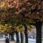Szczecin Jesień 2013 :: 10