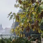 Szczecin Jesień 2013 :: 11