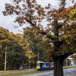 Szczecin Jesień 2013 :: 15