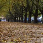Szczecin Jesień 2013 :: 20