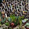 kiermasz-ogrodniczy-03