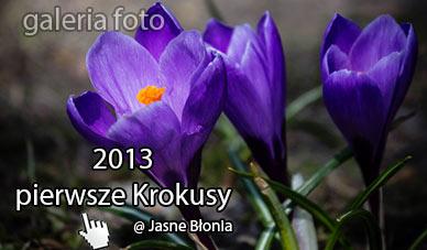 Szczecin. Fotoreportaż. Wiosna 2013. Pierwsze Krokusy na Jasnych Błoniach