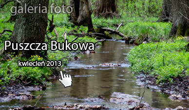 Szczecin. Fotoreportaż. KWIECIEŃ 2013. Puszcza Bukowa w obiektywie