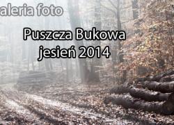 Szczecin, zdjęcia, fotografie, Puszcza Bukowa, jesień, fotogaleria, galeria zdjęć, w Szczecinie