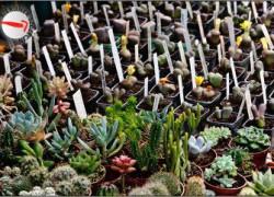 szczecin, kiermasz ogrodniczy, pamiętajcie o ogrodach, weekend w szczecinie, wały chrobrego, imprezy na wałach, kierunek szczecin, wystawa florystyczna, aleja kwiatowa