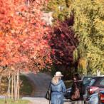 Fotografia z cyklu Szczecin na co dzień wykonana 26.10.2015 - jesień na osiedlu Bukowym