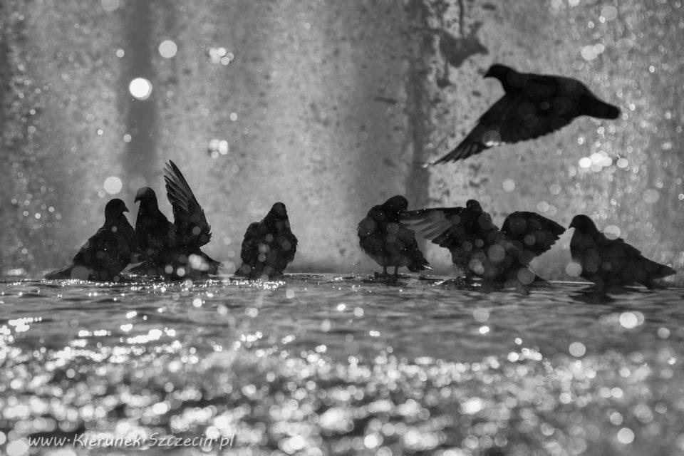 Szczecin. FOTOREPORTAŻ. 09.05.2016. Szczecińskie ptaki przy Bartłomiejce @ Szczecin