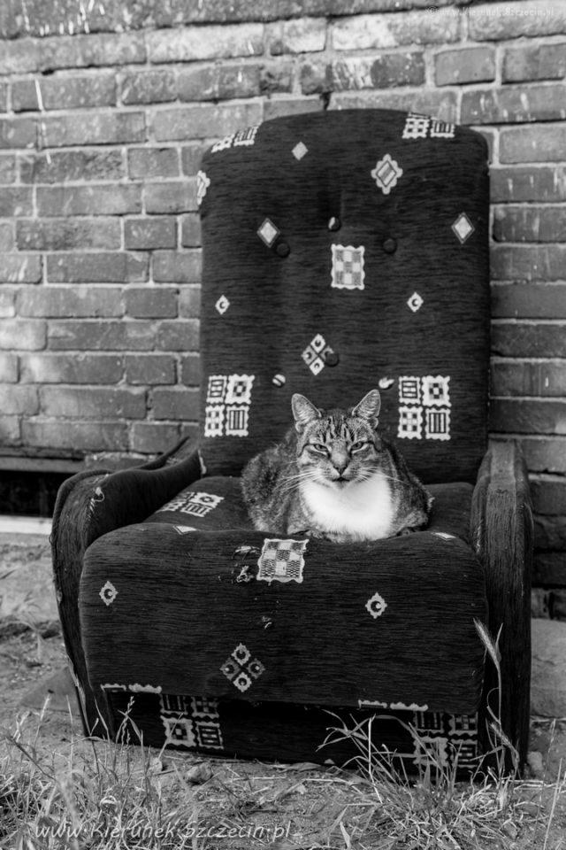 Szczecin. PROJEKT FOTOGRAFICZNY. Street cat's of Szczecin, czyli koty uliczne w Szczecinie