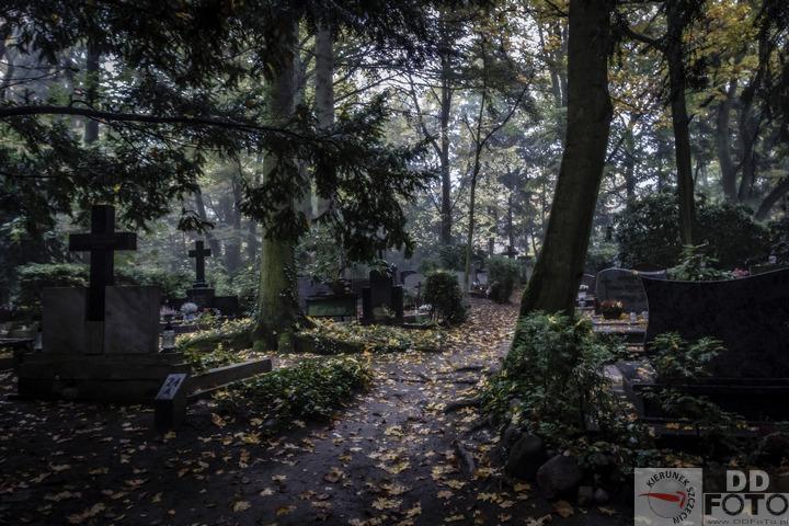 Szczecin. Cmentarze. Cmentarz Centralny w Szczecinie