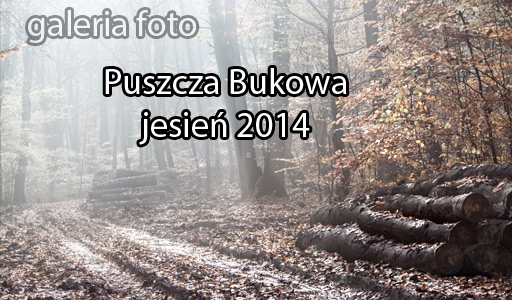 Szczecin. Fotoreportaż. 2014 – Puszcza Bukowa w jesiennej odsłonie…
